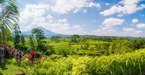 Beautiful view of Jatiluwih Rice Fields