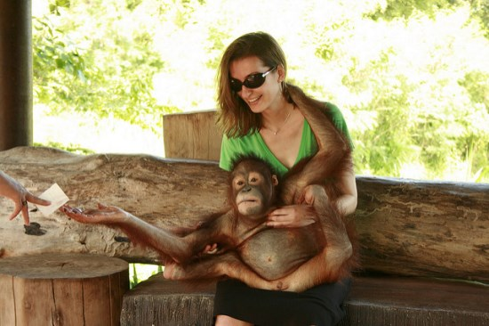Interacting to orangutan in Bali Safari and Marine Park