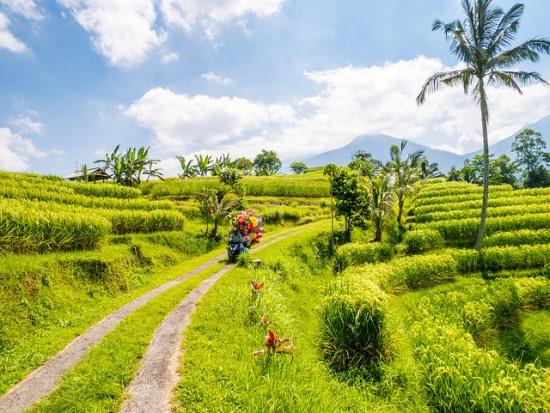 Jatiluwih Rice Fields at Tabanan Bali