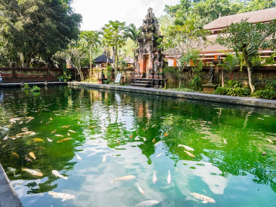 Pond with big koi fishes at Pura Tirta Empul