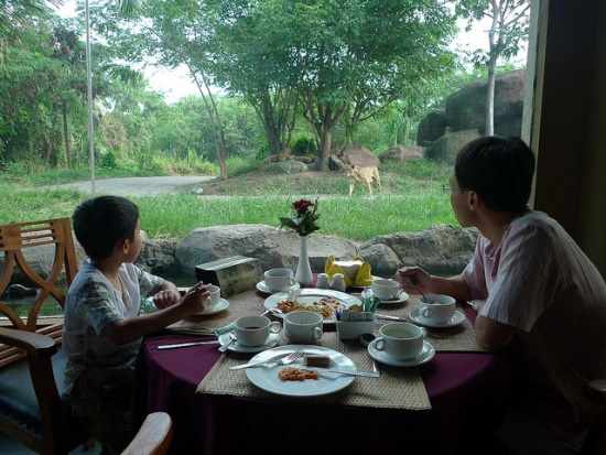 Restaurant with the view of animal in Bali Safari and Marine Park