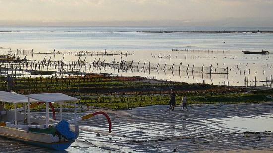 Seaweed farming in Nusa Lembongan Bali