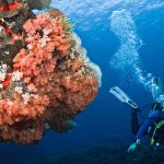 Snorkeling at Crystal Bay Nusa Penida Bali