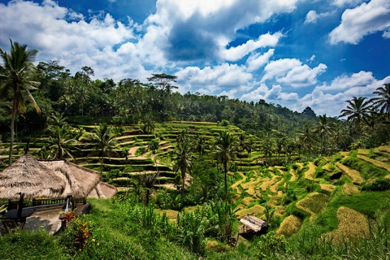 Tegalalang Rice Terrace from the hill