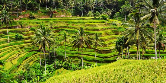 The magnificent view of Tegalalang Rice Terrace
