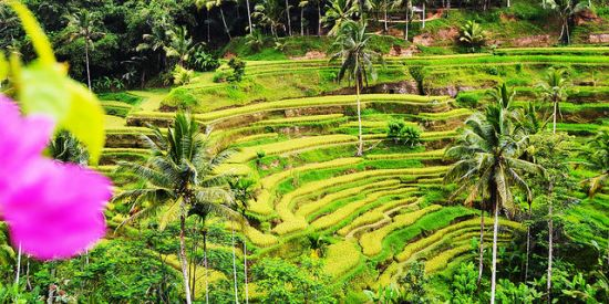 Visiting Tegalalang Rice Terrace Bali